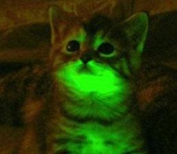 Mèo phát sáng có thể chống lại HIV/AIDS