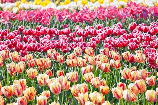 Phần mềm quản lý, tra cứu đa dạng thực vật ở VN