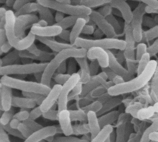 Nguy cơ ngộ độc thực phẩm tăng vì đại dương ấm hơn