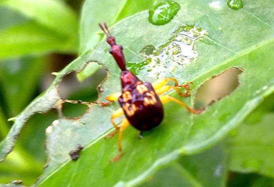 Con này là côn trùng gì vậy?