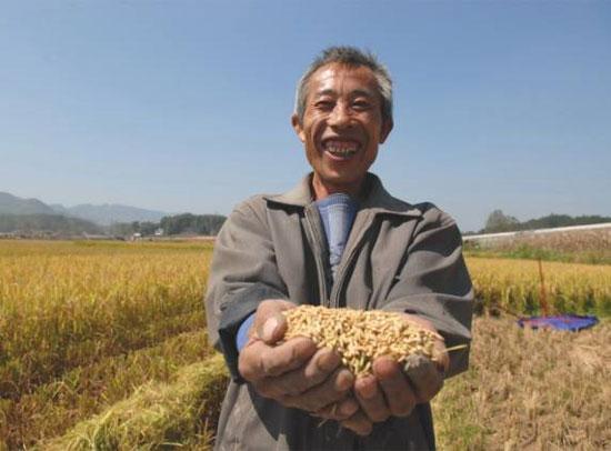 TQ lai tạo thành công giống lúa lai siêu chủng