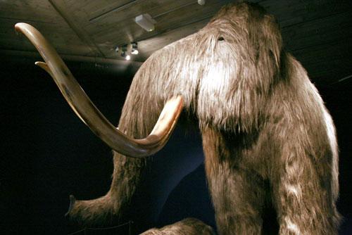 Máu nhân tạo từ voi tiền sử