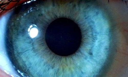 Chữa mù lòa bằng tế bào gốc phôi người