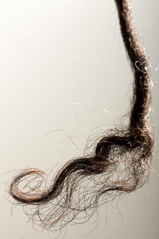 Mẫu tóc của một người đàn ông là thổ dân (100 tuổi) đến từ khu vực Goldfields, miền Tây Australia. (Nguồn: sciencedaily.com)