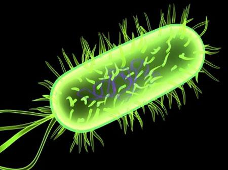 Khuẩn E.coli được mã hóa thông tin bí mật