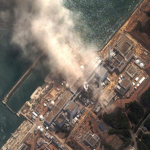 Bộ Lâm nghiệp Nhật Bản đã đồng ý chôn đất nhiễm xạ vào các khu rừng.