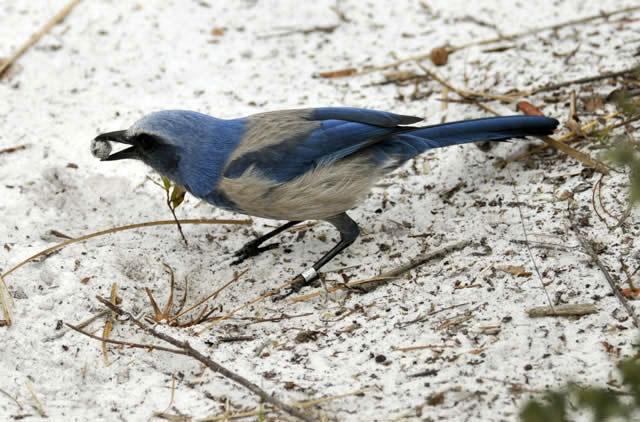 Một con chim giẻ cùi