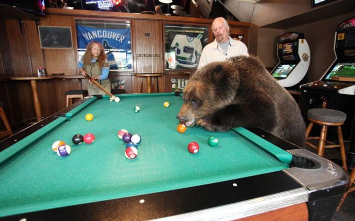 Ảnh động vật tuần qua: Gấu học chơi bi-a