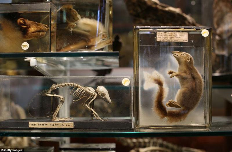 Bộ sưu tập kỳ lạ về các loài động vật