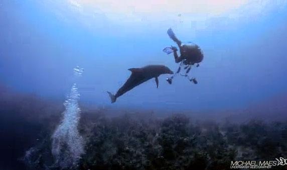 """Video: Thợ lặn gặp nguy vì bị cá heo """"ve vãn"""""""