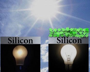 Pin mặt trời sinh học làm từ rau cải