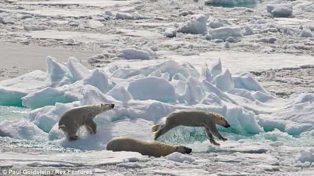Sau cuộc trốn chạy vội vã, gia đình gấu dừng lại để ăn