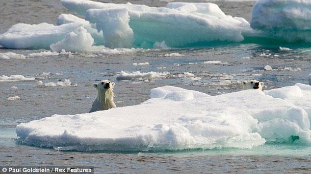 Chú gấu con và gấu mẹ vẫn cẩn thận để mắt đến kẻ săn mồi