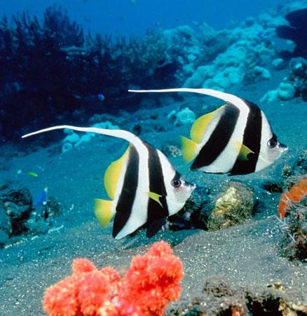 NASA quyết giải mã bí ẩn của đại dương
