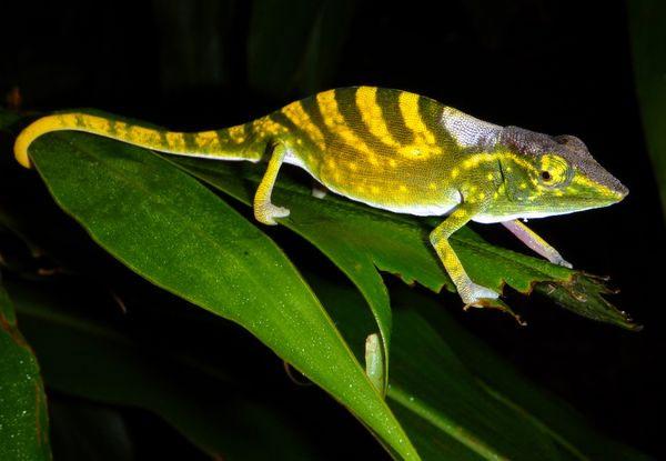 Sinh vật vô danh và kết cục tuyệt chủng