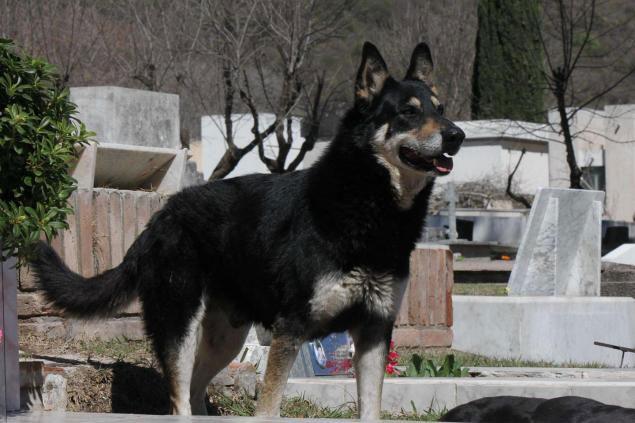 Con chó có thể ở cạnh ngôi mộ cho tới khi chết.