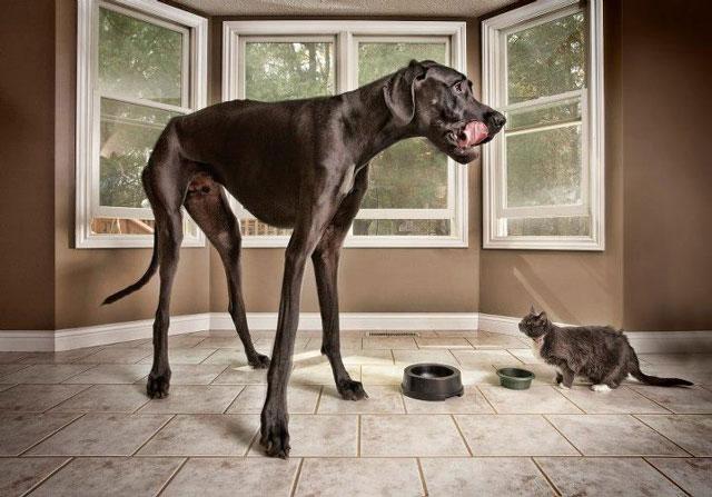 Con chó cao nhất hành tinh