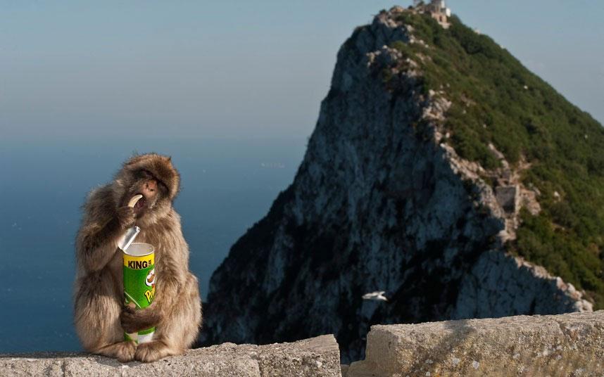 Chú khỉ thích thú với hộp khoai tây chiên