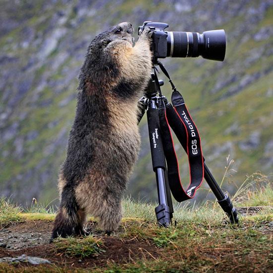 Một con sóc đất tinh nghịch, rướn 2 chân trước lên cao, cố với tới ống kính máy ảnh. Có vẻ như nó muốn thử làm nhiếp ảnh gia.