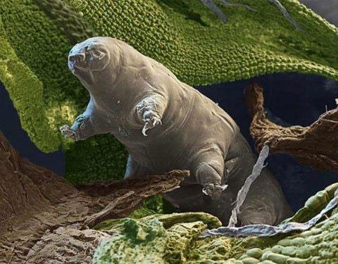 Phát hiện sinh vật Trái đất sống được trên vũ trụ