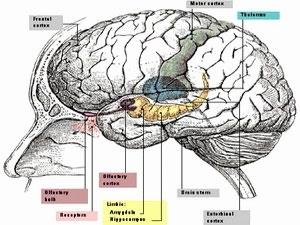 Cấy ghép thần kinh giúp tăng cường chức năng não