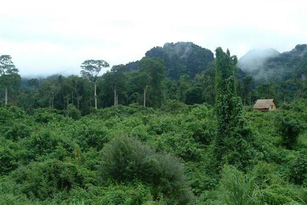 Cát Tiên có cơ hội là di sản thiên nhiên thế giới