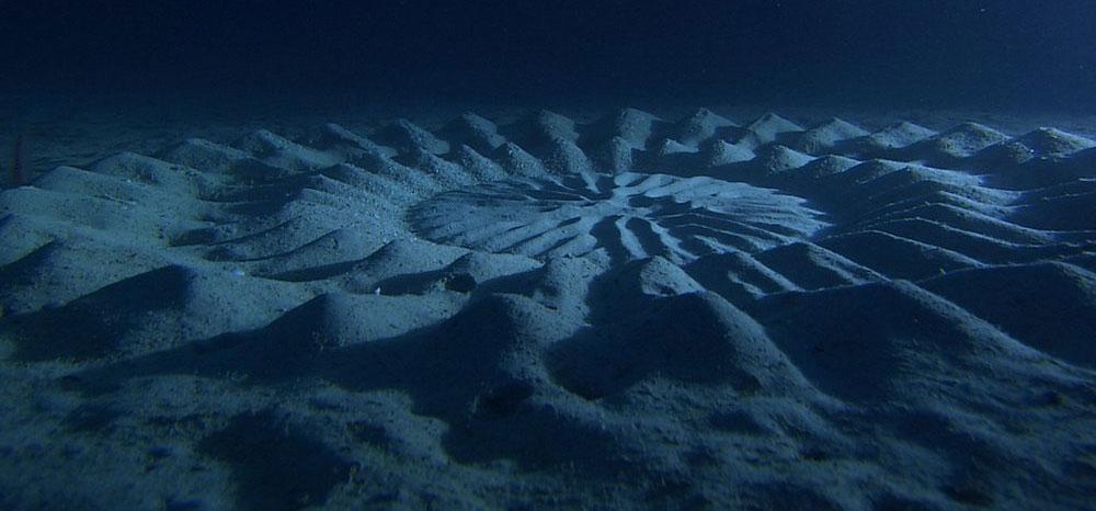 """""""Vòng tròn bí ẩn"""" ở đáy biển do nhiếp ảnh gia Ookata chụp."""