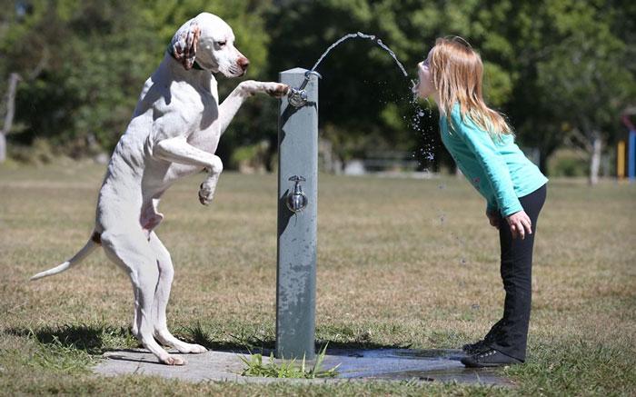 Ảnh động vật tuần qua: Chó cho chủ uống nước