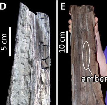 Manh mối về khí hậu thời đầu kỷ Eocene