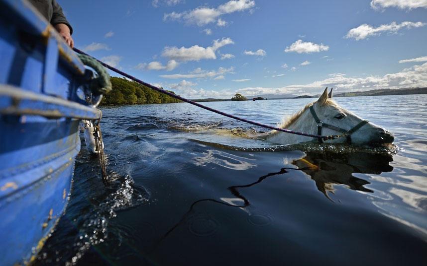 Một con ngựa được chủ nhân của nó huấn luyện bằng cách tập bơi qua sông ở Scotland