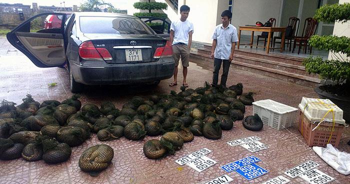 Hai kẻ buôn lậu động vật bị bắt tại Hà Tĩnh, Việt Nam. Cảnh sát đã tịch thu được 4 con hổ con và rất nhiều tê tê đang nằm trong danh sách có nguy cơ tuyệt chủng.