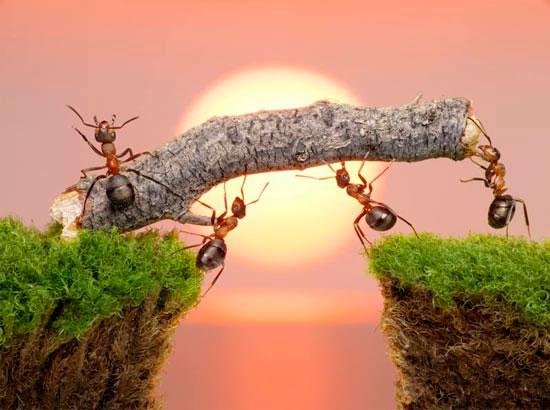 Bài học làm việc từ loài kiến