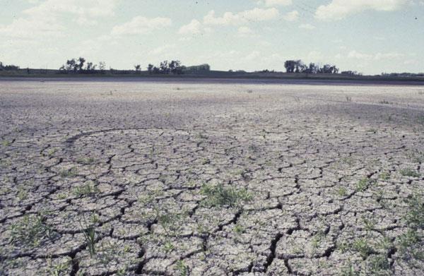 Biến đổi khí hậu gây ra rất nhiều hậu quả cho con người