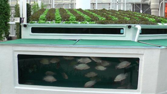 Những mô hình nông nghiệp an toàn và bền vững của tương lai