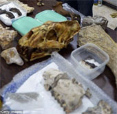 Cận cảnh hóa thạch cá sấu, voi, chim khổng lồ thời tiền sử