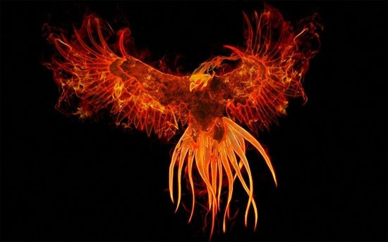 Chim lửa