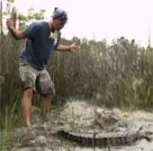 Video: Tay không bắt cá sấu đói