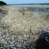 Gần 100 tấn cá chết do nhiễm hóa chất ở Trung Quốc