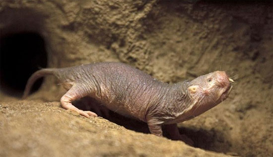 """Những loài vật có khả năng """"thành tinh"""" trên Trái đất"""