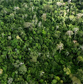 Tàn tích con người 10.000 năm trước tại Amazon