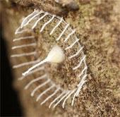 Sinh vật bí ẩn đằng sau tổ kén đẹp mắt