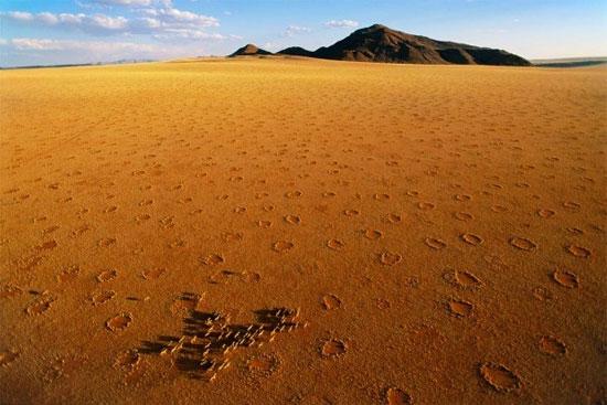 Sự cạnh tranh ngầm giữa các cây cỏ của sa mạc dưới lòng đất là nguyên nhân tạo ra những vòng tròn này.