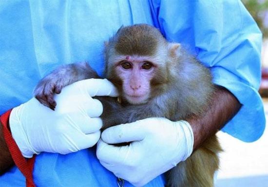 Iran sắp đưa sinh vật sống lên vũ trụ