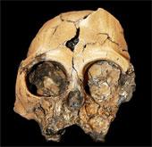 Hóa thạch sọ khỉ 6 triệu năm tuổi tại Trung Quốc