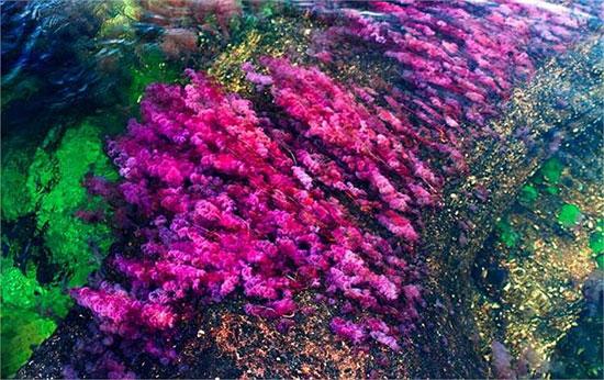 Vẻ đẹp của dòng sông Cona Cristales