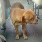 Video: Xúc động chú chó tìm chủ trên xe bus hàng ngày