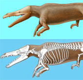 Phát hiện hoá thạch cá voi cổ đại ở sa mạc Peru