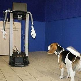 Phát hiện bất ngờ về lòng trung thành của loài chó