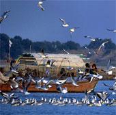 Kỳ lạ ngôi làng chim tìm về để chết