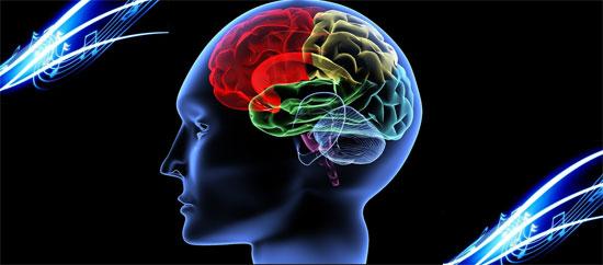 Phát hiện nguồn gốc trí tưởng tượng của não